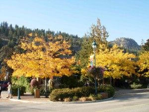 The Gasthaus in Peachland by Trish Cenci