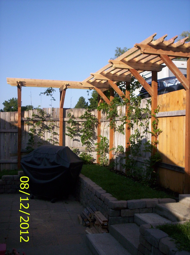 Wisteria arbor above privacy fence