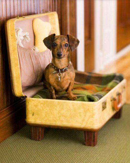 Cama para cachorro feita de mala.