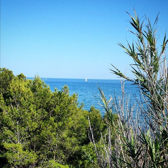 ¿Un #paseito en #barco? #Vela #Viaverde #Oropesa #Benicàssim #Benifornia #Benilovers #Mediterraneo #verde #mar #vegetacion #flora #Benicassimparaiso #felizviernes #love #instalike #sun #paraiso