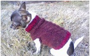 dog sweater cable knit chihuahua
