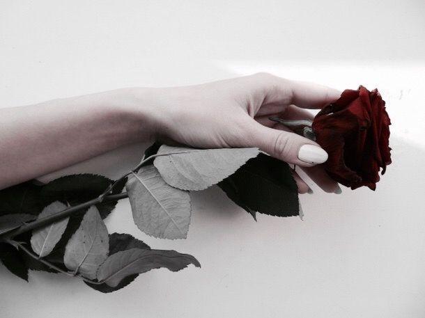 Pinterest Carmazos Red Aesthetic Rose Hathaway Rose
