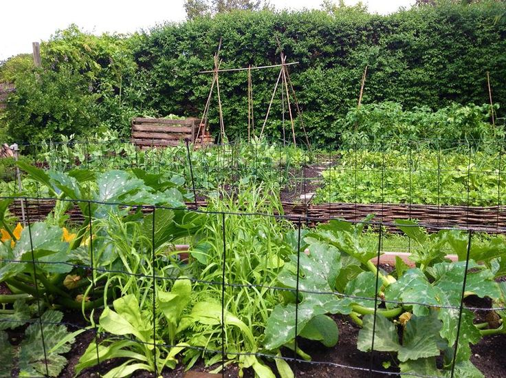 Activity at the veggie patch