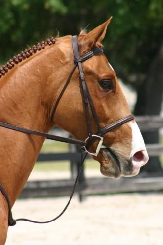 47 best HORSE and HOUND images on Pinterest Horses, Black and Homes - horse sales contracts