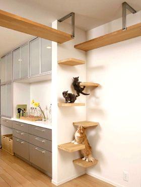 猫への思いやりがつまった家!充実のキャットウォーク実例まとめ   リフォーム費用・価格・料金の無料一括見積もり【リショップナビ】