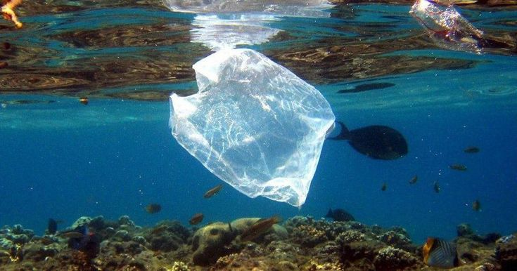 Prohibit to supermarkets, free fairs of the commune and commerce in general the packaging with plastic bags