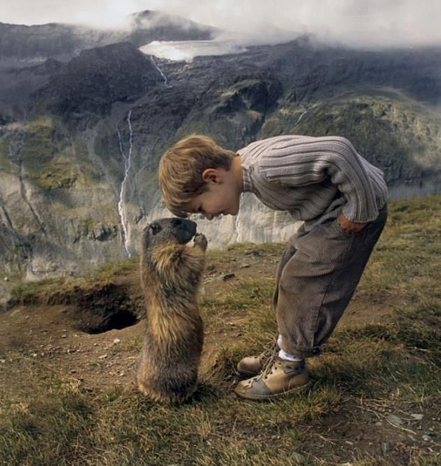 The schoolboy, 8, who has struck up a remarkable friendship with a colony of marmots, alpine animals