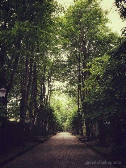 Via delle Rimembranze #Castellarquato #Piacenza #Italia. #trees