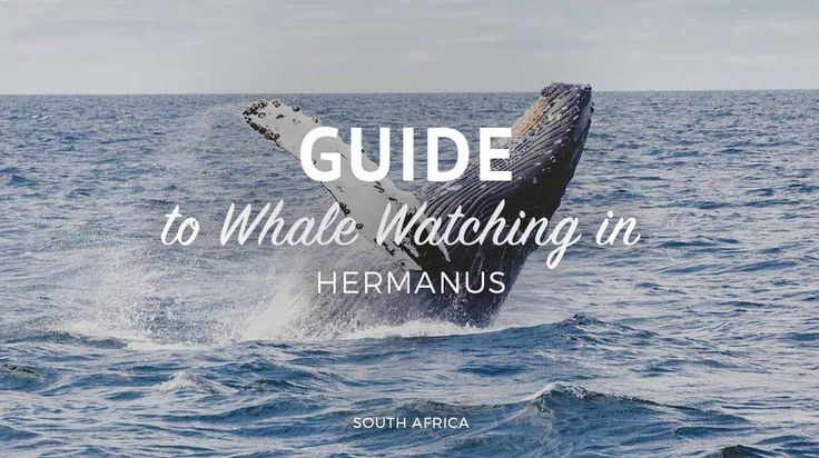 The ultimate guide to whale watching in Hermanus - Cape Town South Africa travel bucket list