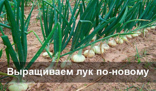 Некоторые оригинальные техники посадки и выращивания лука помогут вам получить достойный урожай.