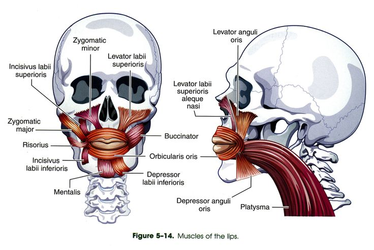 27 best Anatomy and physiology of normal speech production images on ...