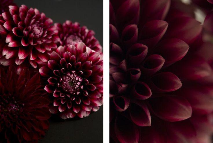 Flores marsala.
