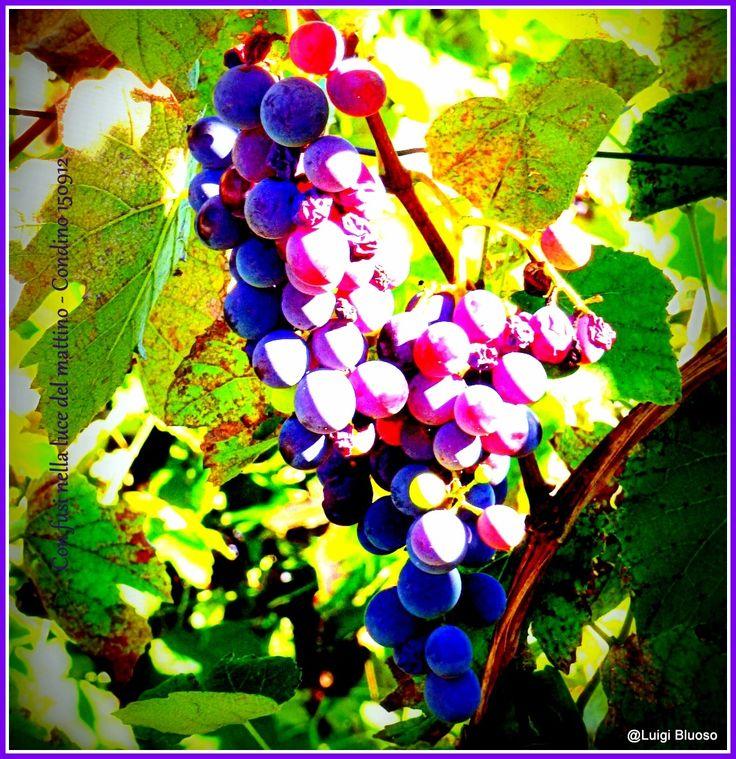 Parti-Colori - Grappolo d'uva by L,Spagnolo