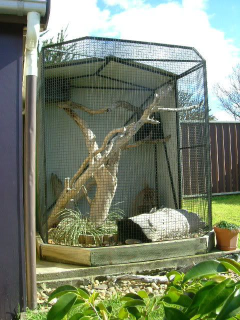 Here's Brutus's home. An outdoor enclosure, half covered/half open. He has river pebbles on the ground and a nice soft grassy garden bed, a couple of hollow logs and two hide boxes (one with an electric blanket)...he's not spoiled ! - See this image on Photobucket.