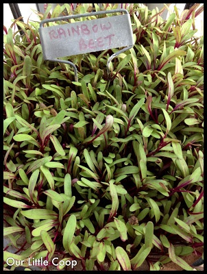 25 best images about micro greens on pinterest for Best growing medium for microgreens