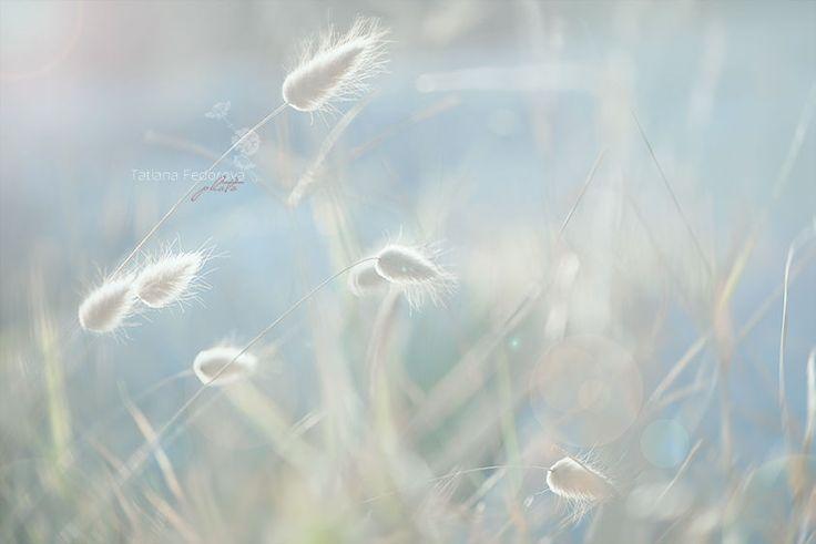 Уже растаял снег, бегут ручьи так торопливо,<br />  И солнце силу раздает природе так ретиво,<br />  Вот так прекрасен мир, пропахший в миг... Смотрите больше коллекций на портале Ярмарка Мастеров.