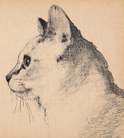 Cat illustration by Sien De Luyck, via Flickr