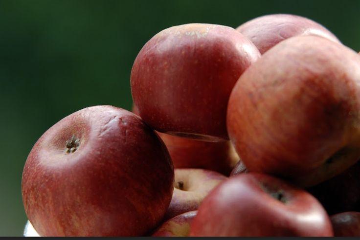 """Con i Diari Salernitani vi portiamo a San Mango Piemonte per farvi conoscere """"La Regina delle mele"""". È abitudine delle mamme e delle nonne svezzare i bambini con pappe a base di """"mel annurca grattugiat"""" perché gustosa e ricca di vitamine e nutrienti  #pastaamato"""