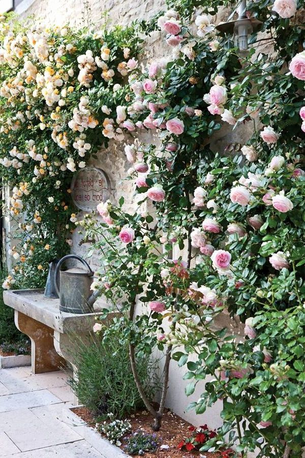 Ghiaia Da Giardino Bello Pin Di Kimberly Bruening Su I Love Flowers Pinterest Ghiaia Da Giardino Giardino Idee Giardino