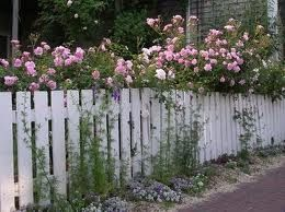 Wooden Picket Fence in Bloom