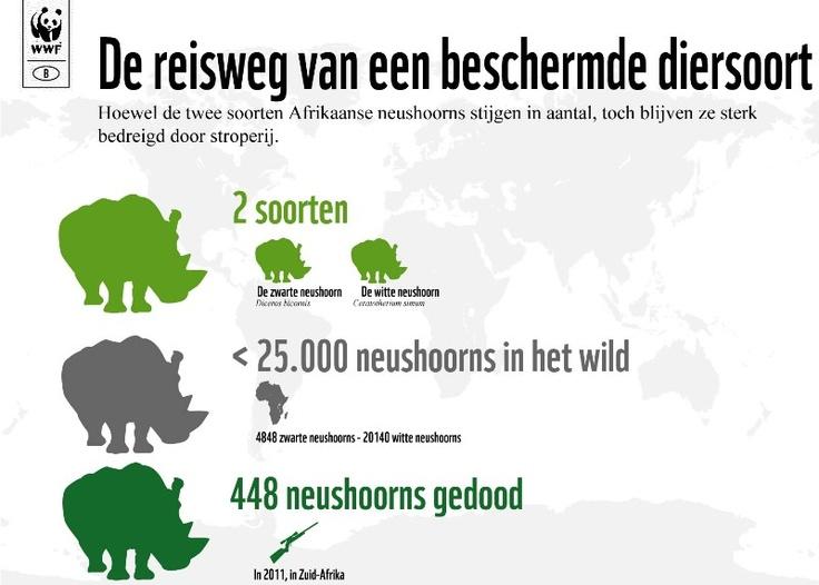 Neushoorn, de reisweg van een beschermde diersoort
