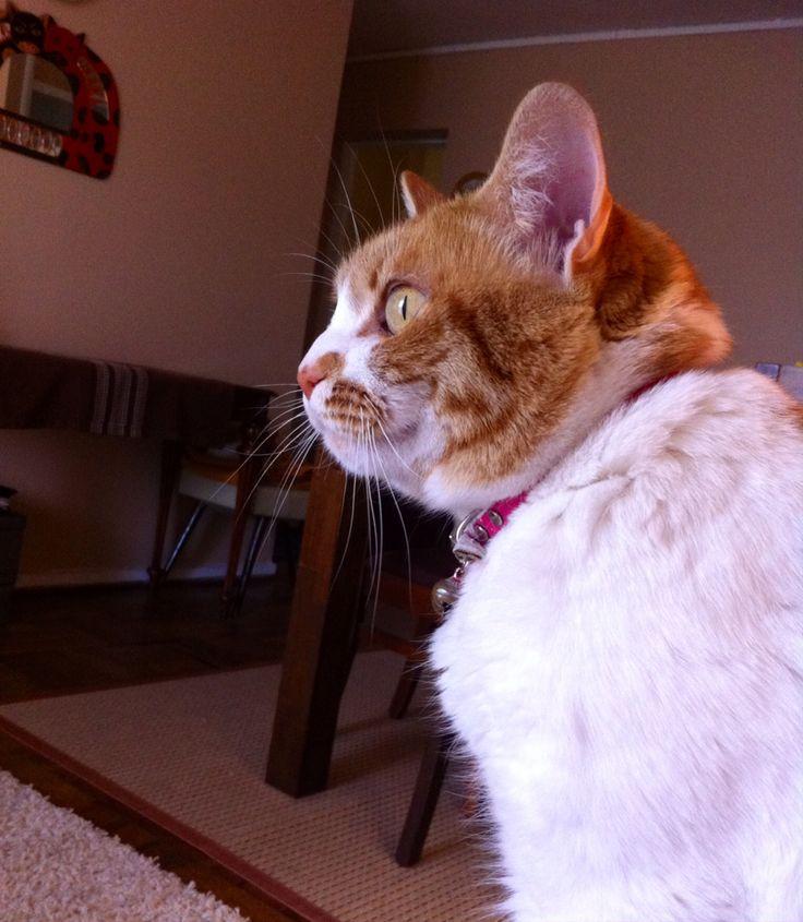 Alexa #hija #gata #cat #chat