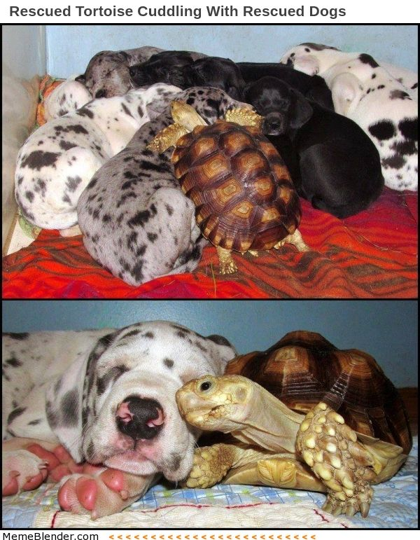 Rescue Animals – Puppies and Tortoise