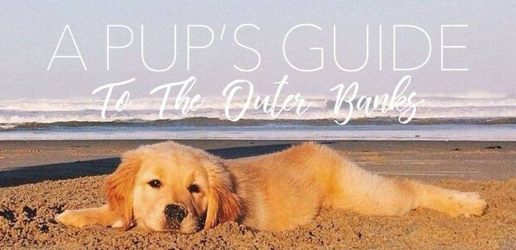 A Pup's Guide To The Outer Banks - Resort Realty of the Outer Banks | #OBX #puppy