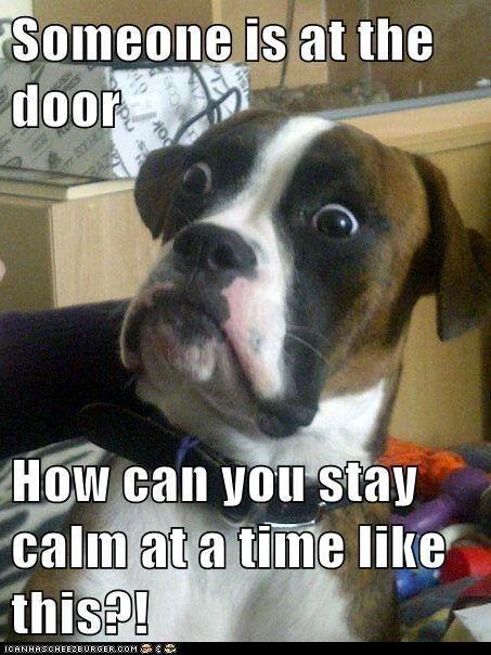 Dog attitude towards anything at the door