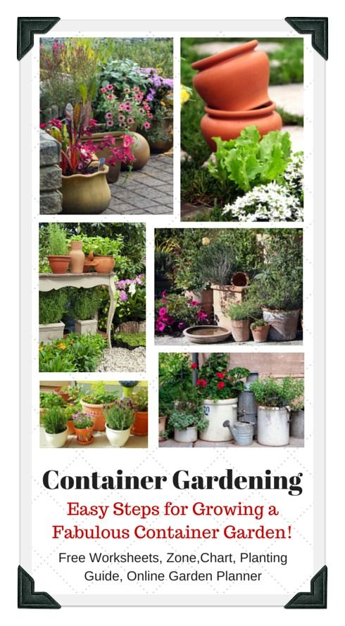 Easy steps for growing a fantastic container ve able garden on your patio balcony porch