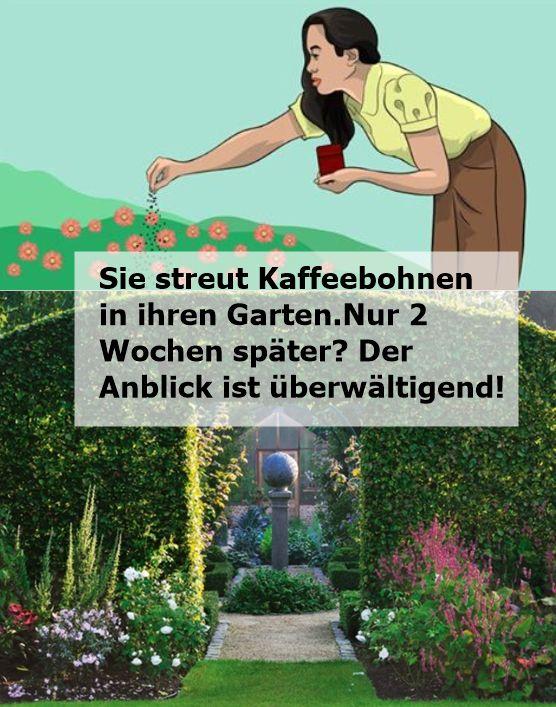 Sie streut Kaffeebohnen in ihren Garten. Nur 2 Wochen später? Der Anblick ist …