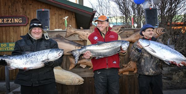 Champion Ron Johnson, center, holds his 25.65 lb king salmon that won the 24th annual Homer Winter King Salmon Tournament on Saturday. He's flanked by second-place Gino Del Frate (25.10 lbs), right, and third-placeGary Deiman (24.30 lbs), left. Johnson's king was also the largest white king. (Jim Lavrakas / Far North Photography)