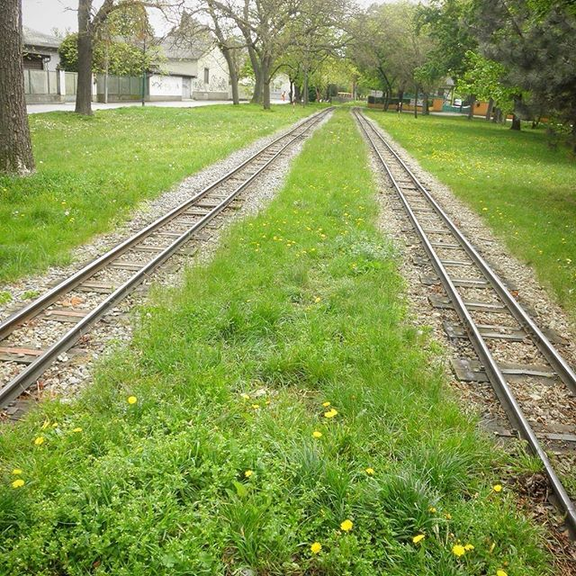 Liliputbahn im Prater 夕べの #旅するドイツ語 で紹介されたリリプットバーンの線路♪(まだ見れてない) 小さいけど本格的な線路なのが楽しい〜乗ってみたいけど大人1人では…なかなか厳しい…(笑) #liliputbahn #prater #wien #österreich #imFrühling #löwenzahn #wienstagram #imogwien #visitvienna #vienna_austria #bahn #fürkinder #bäume #travelpic #travelgram #railwayphotography #オーストリア #ウィーン #リリプットバーン #遊園地 #旅写真 #プラーター #プラーター公園 #春の旅 #たんぽぽ #春爛漫 #旅するユーロ