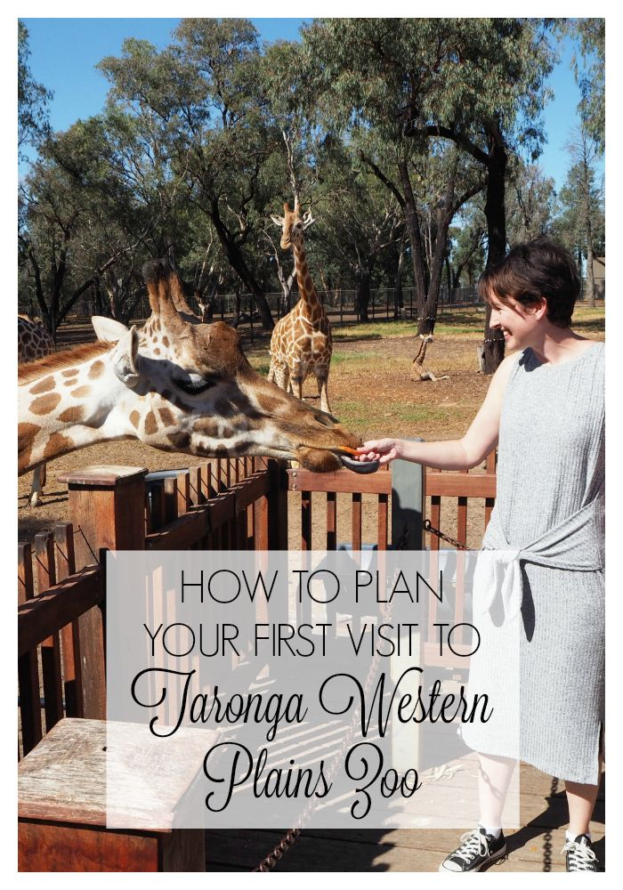 How to Plan Your First Visit to Taronga Western Plains Zoo aka Dubbo Zoo - What we learned on our recent trip to Dubbo Zoo, including how to get around, what to see, where to stay, and which optional extras to choose #familytravel #zoo #dubbozoo