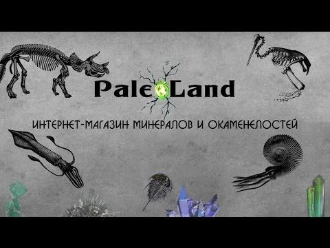 Интернет-магазин PaleoLand предоставляет большой выбор минералов и окаменелостей. У нас Вы можете купить окаменелости, купить подарок на день рождения, купить минералы и камни, купить аммонит, купить белемнит, купить динозавра. Сегодня все больше появляется интерес к прошлому нашей планеты. Человек ищет, находит и изучает тех, кто когда-то жил на нашей земле.