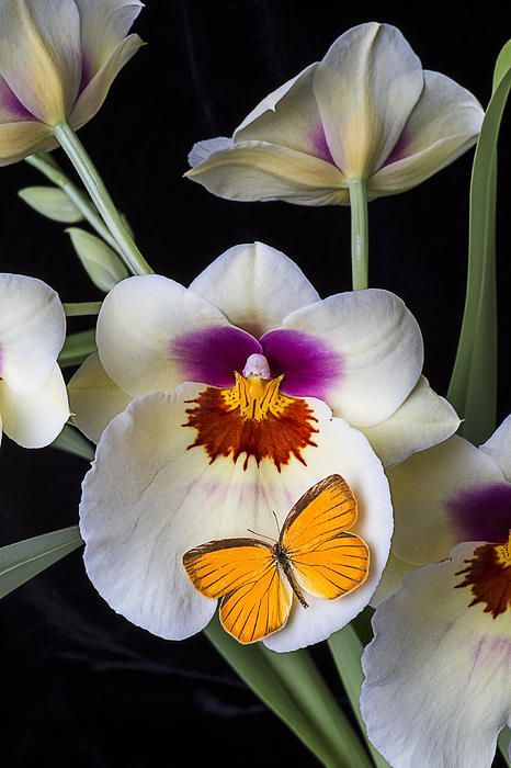 MAGIC http://adrianamontalvo.tumblr.com/