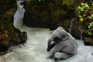 ElephantsWater, Baby Elephant, Life Magazines, Bathroom Wall, Bathtime, Child Life, Spa, Animal, Bath Time