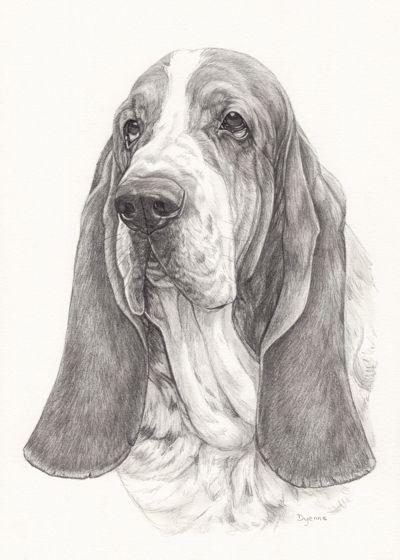 Illustratie Basset, tekening van hond in grafiet potlood door Dyenne Nouwen