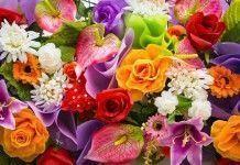 Esencias florales de bach ¡una magnífica manera de dar color a tu vida!