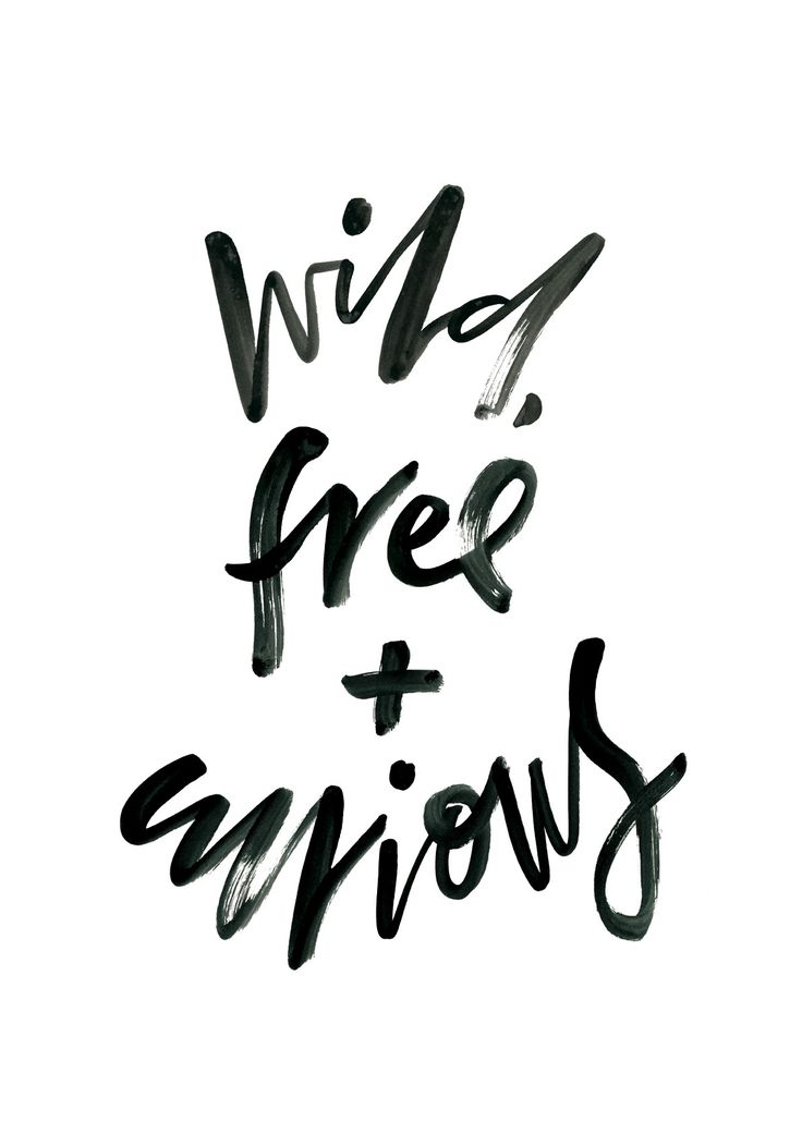 Image of Wild, Free + Curious