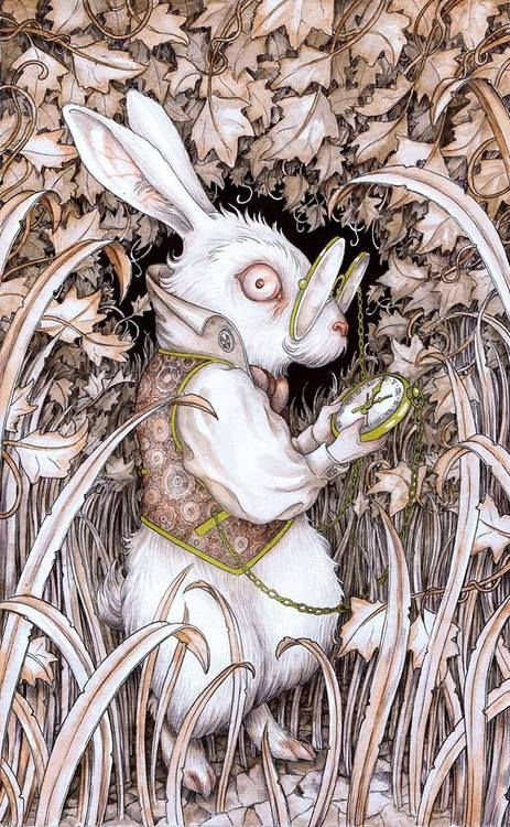 WHITE RABBIT BY ADAM OEHLERS