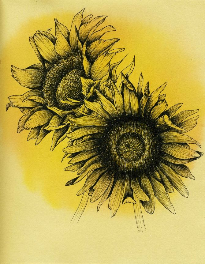 Line Drawing Sunflower Tattoo : Botanical illustration jessie wu ink d pinterest