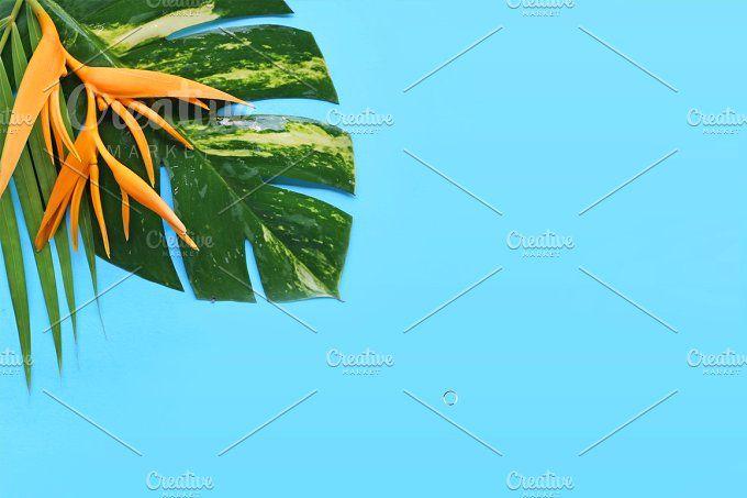 tropical flowers by Trefilova Anna on @creativemarket