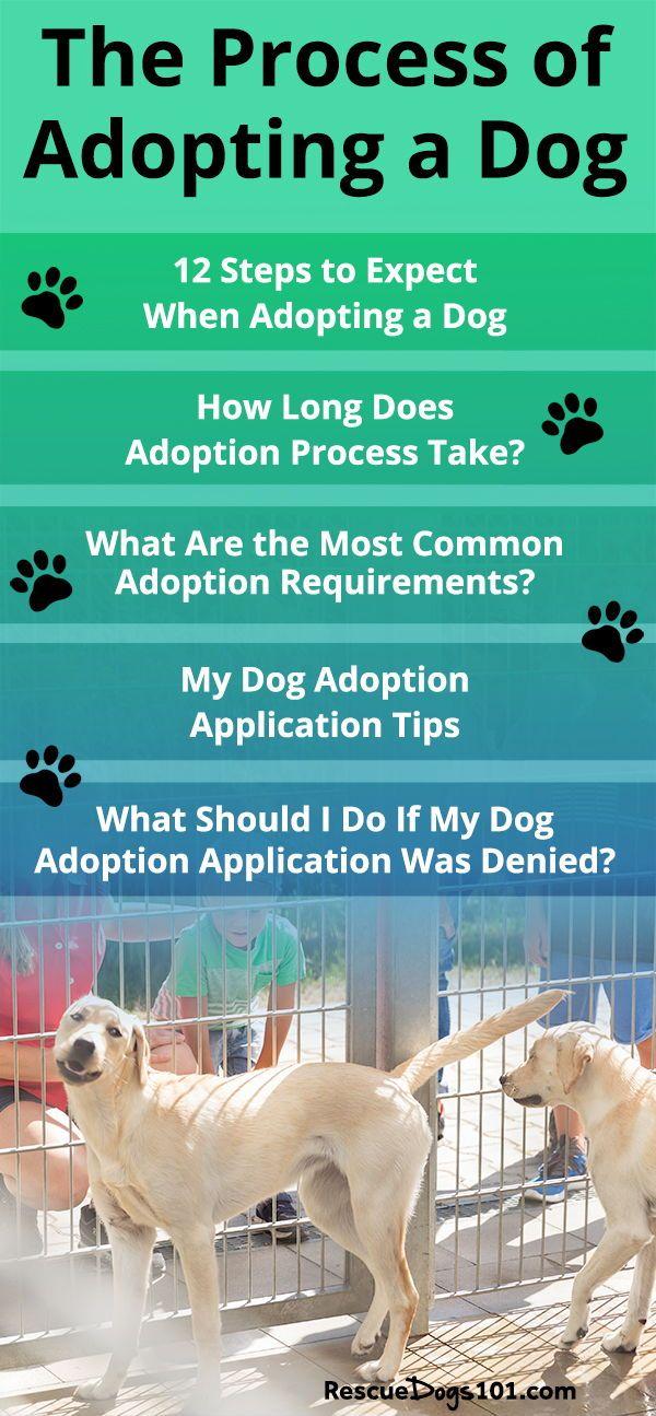 Adopting A Shelter Dog Does Not Have To Be Complicated Dog Adoption Dog Training Training Your Dog