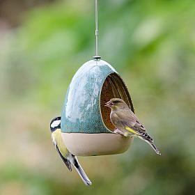 Vierno Drinker - bird drinker - bird feeder
