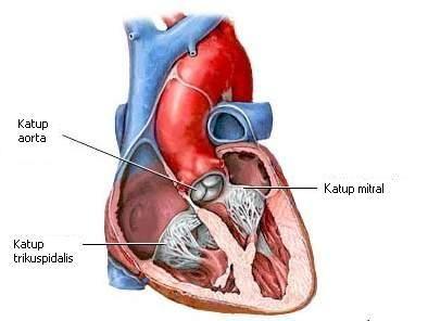 Cara Menyembuhkan Penyakit Katup Jantung >> Bagi anda yang memiliki penyakit Katup Jantung kini saat nya anda atasi dengan menggunakan yang alami yang dapat menyembuhkan penyakit katup jantung secara cepat tanpa efek samping apapun.