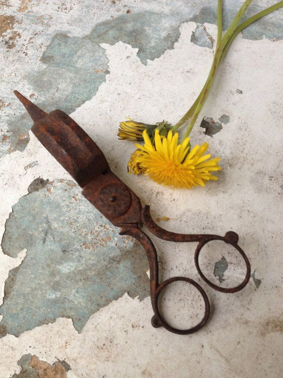 Candle Snuffer/Macabre Decor/Scientific Decor/Primitive/Rustic Decor