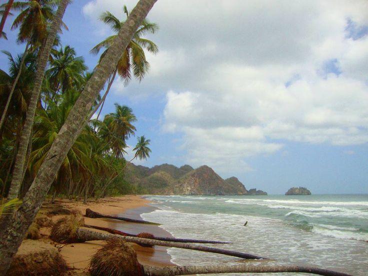 Has oído hablar de la península de Paria? Esta zona costera del estado Sucre es una sorprendente fuente de biodiversidad en nuestro país. En esta península llueve mucho durante todo el año por eso las montañas están cubiertas de imponentes selvas que se encuentran con el mar en paradisíacas playas.  Algunas investigaciones señalan que las selvas de Paria guardan mucha similitud con las del Escudo Guayanés al sur de Venezuela pero Paria al estar frente al mar Caribe creó un ecosistema único…