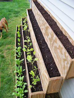 Small-Space Gardening/Urban Gardening