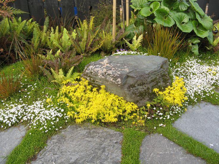 Pratia groundcover, native NZ ferns, tractor plants in background.Hokitika New Zealand 2012